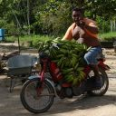 brommer ,Suriname