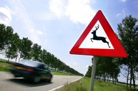 verkeersbord, overstekend wild