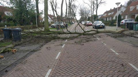 Storm tijdens de rijles, een omgevallen boom. Foto: Peter Pompert
